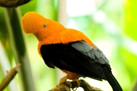 Veľké vtáky ázijské mláďatá Lesbičky majúce sex zadarmo