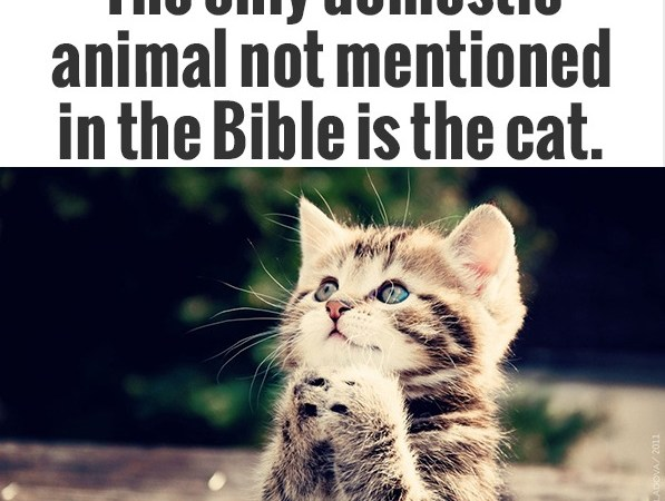 Cat is the only domestic animal,which is not mentioned in the Bible because…