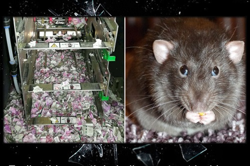 Rat got inside ATM, shredded $18,000 worth cash (ATM mice)