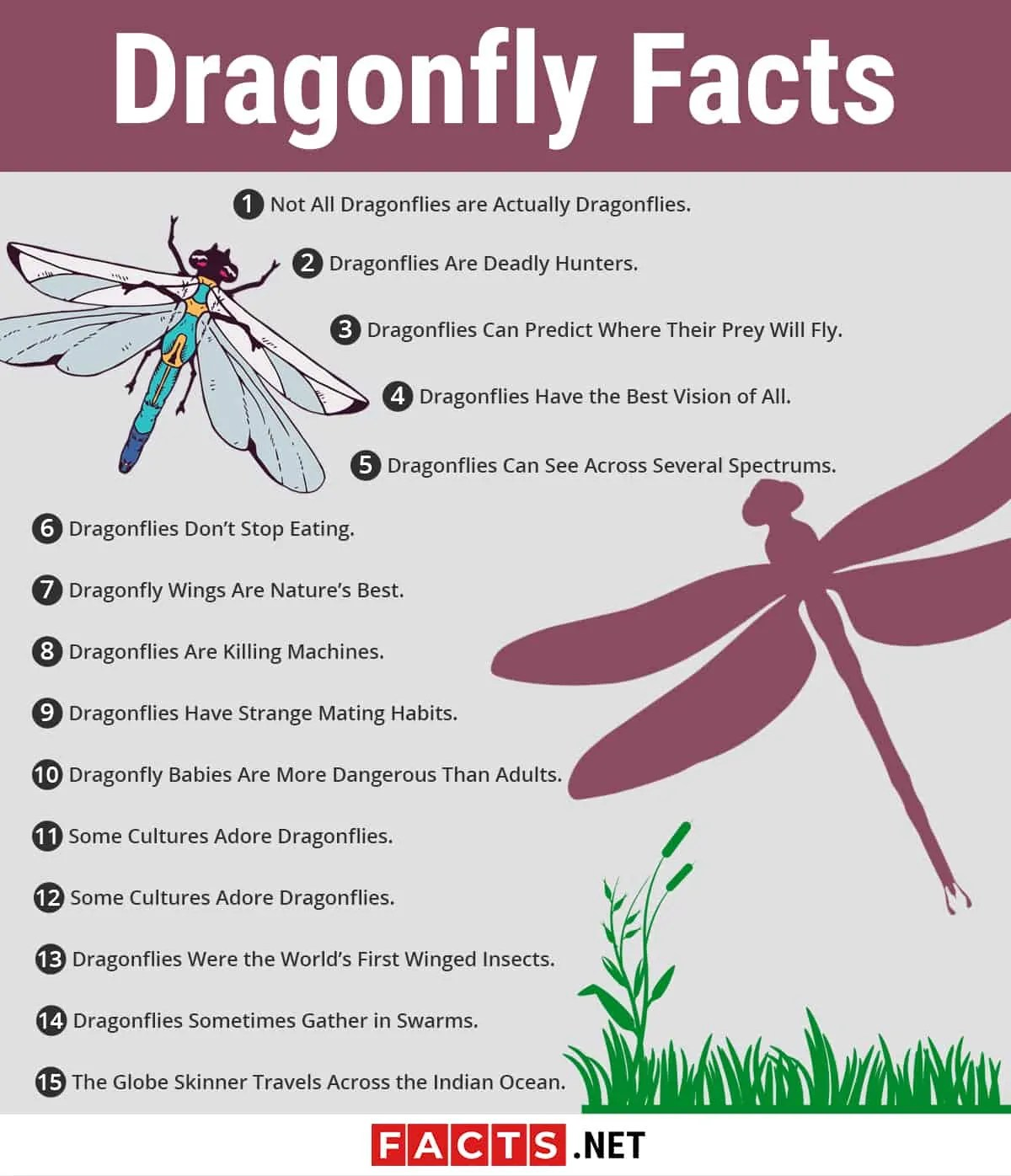 Top 15 Dragonfly Facts