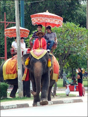 Asian Elephants In Thailand Work Unemployment Welfare