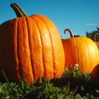Pumpkin Facts For Kids | A Famous North American Plant