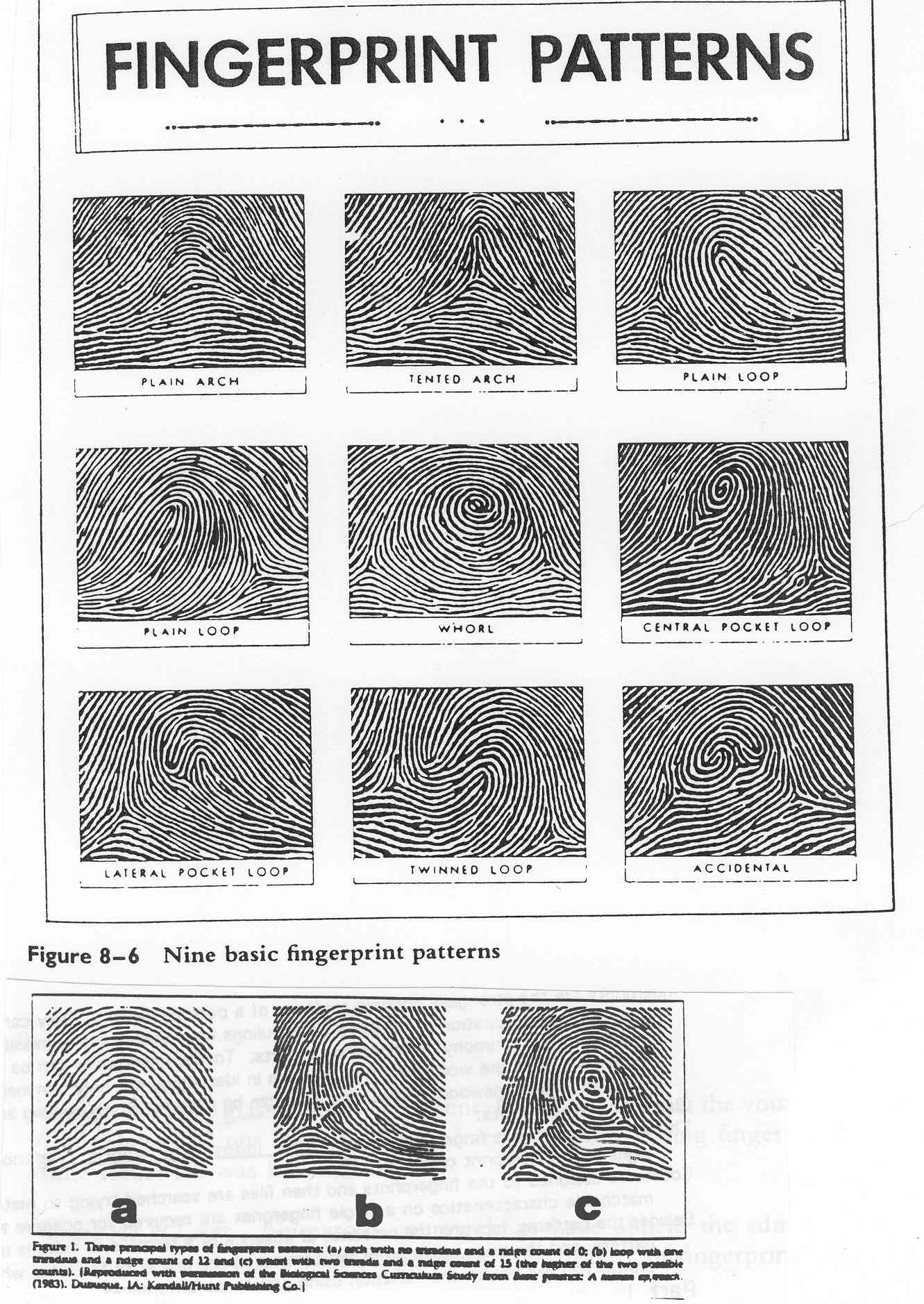 Fingerprints Unique Worksheet