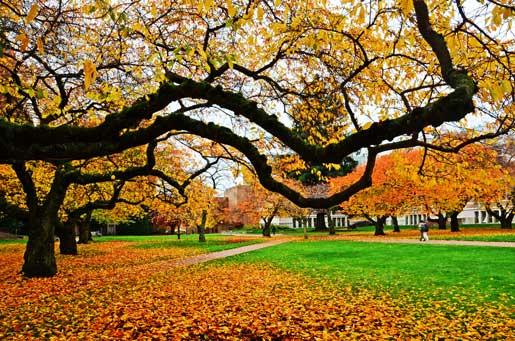 Image result for University of Washington autumn