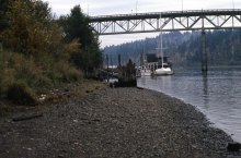 View from eastbank of Willamette River looking South at Sellwood Bridge, Nov. 1981