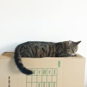 Ronronneuse sur cartons cat cacartoons catsofinstagram amaidepas newlifesoonpourelleaussi