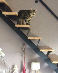 Celle qui adore son nouveau terrain de jeu cat lamaisondefafaillehellip