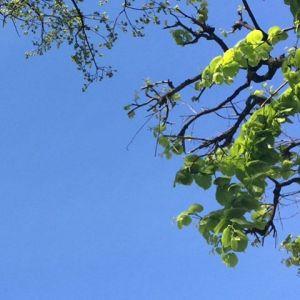 Goter  lt avant lheure ! Bonheur sky nature springhellip