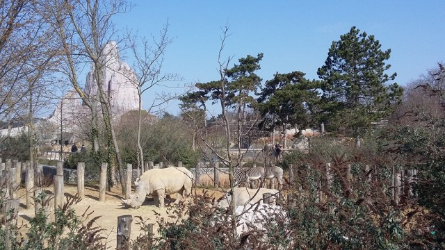 Rhinocéros du Zoo de Vincennes