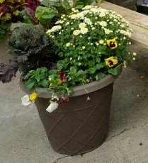 Fall Container 1