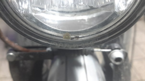 Abgefallene LED und tote Ameise hinter Glas im Scheinwerfer