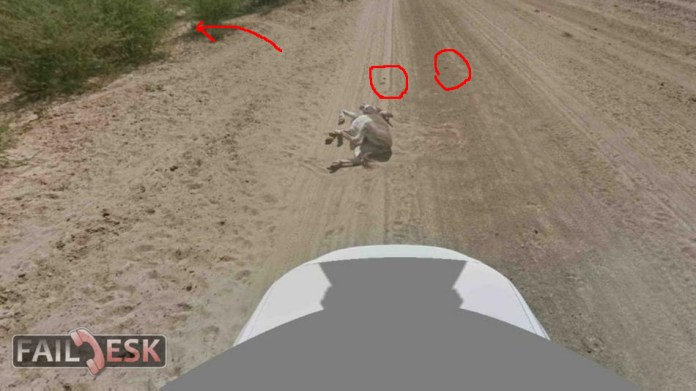 donkey-mesh2
