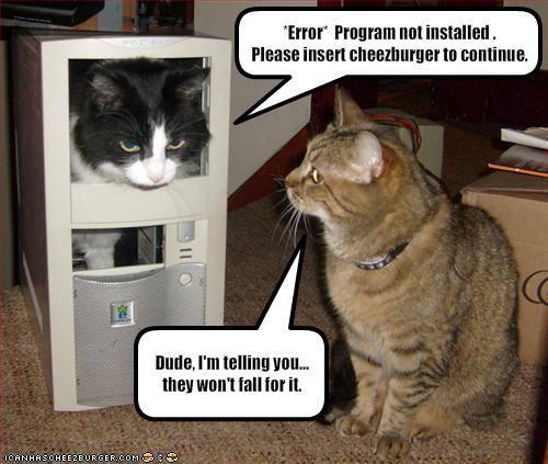 caturday_error