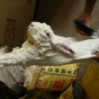 The Truth Behind Angora Fur | Video