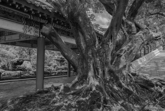 Tree on the path near Zhinan Temple.