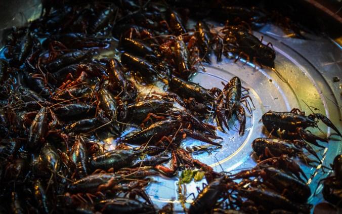 Street crawfish in Chengdu.