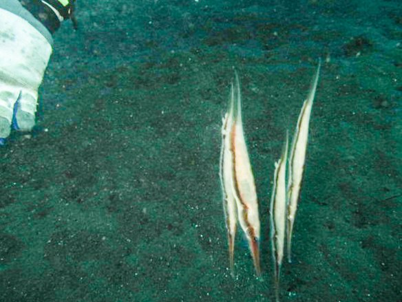 upsidedownfish