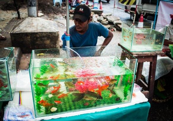 Suspicious goldfish seller.