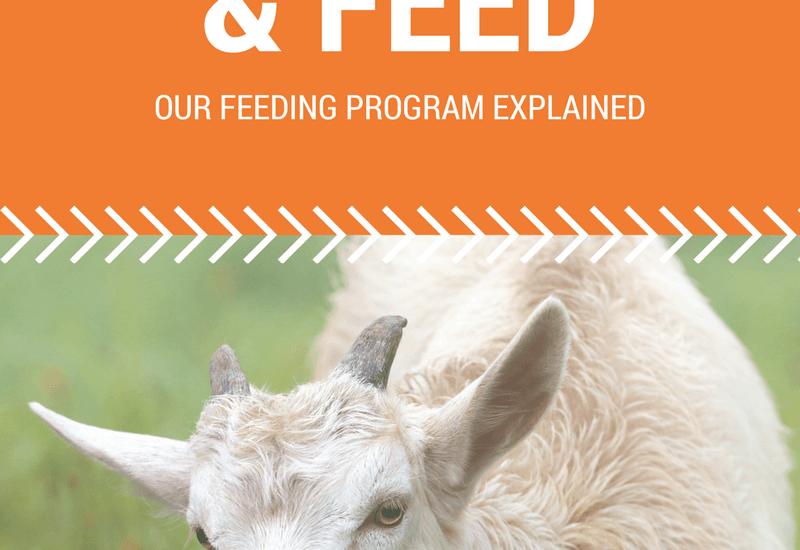 goat-feed