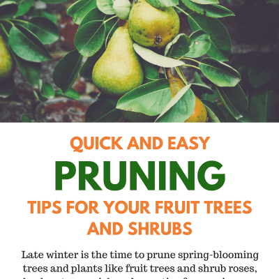 Quick and Easy Tips for Pruning Fruit Trees and Shrubs