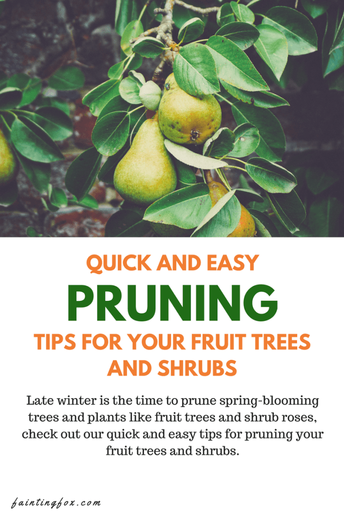 pruning-fruit-trees-shrubs
