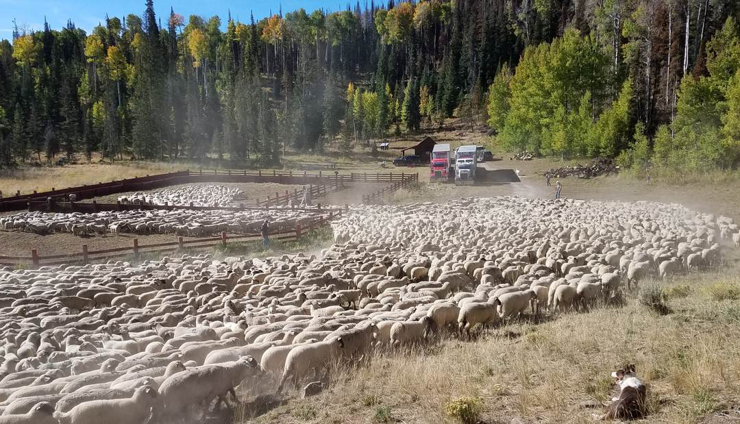 VIDEO: Sheep rancher Carson Jorgensen discusses repercussions of JBS purchase of Mountain States Plant