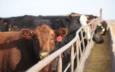 VIDEO: BradKooima discusses cattle markets from commodities broker perspective