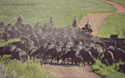 AUDIO: Rancher Dean Wang explains the repercussions of too much government control in cattle industry