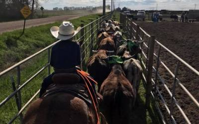 AUDIO: Hank Klosterman discusses why redistributing leverage in market is vital to cattle producers