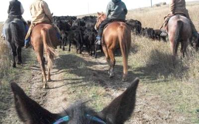 AUDIO: Rancher Shelly Ziesch speaks about the importance of truth in labeling