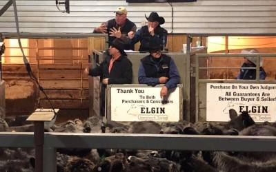 AUDIO: Ted Baum of Elgin Livestock discusses the grim outlook for cattle markets headed into the fall