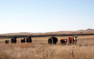 AUDIO: Rancher Tracy Hunt discusses industry threats like Foot and Mouth Disease, Global Roundtable for Sustainable Beef