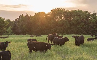 AUDIO: Farm Broadcaster Colonel Jon Phillips discusses the large battles facing the cattle industry