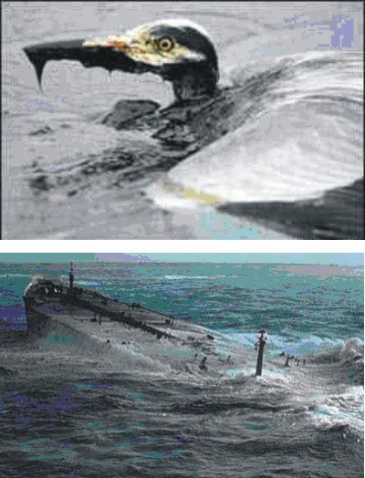 Fig.: Top-Bottom: Affected sea hero after an oil spill;