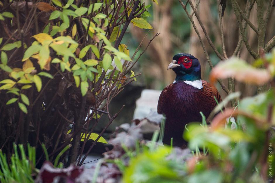 2017-rspb-garden-bird-watch-01
