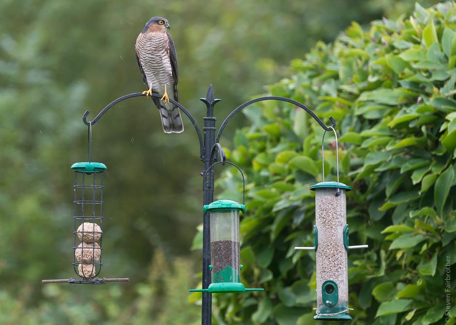 2017-rspb-garden-bird-watch-04
