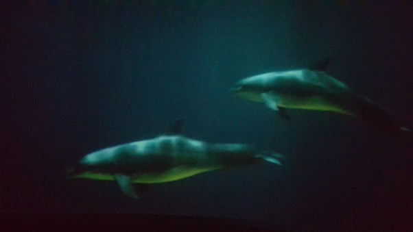 Dolphins in the Digital Theatre.
