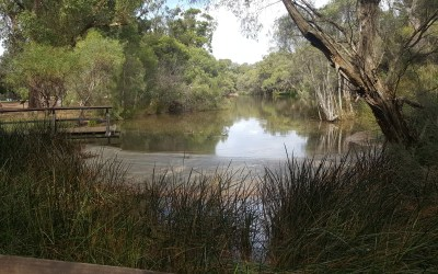 Explore Whiteman park in Perth, Western Australia