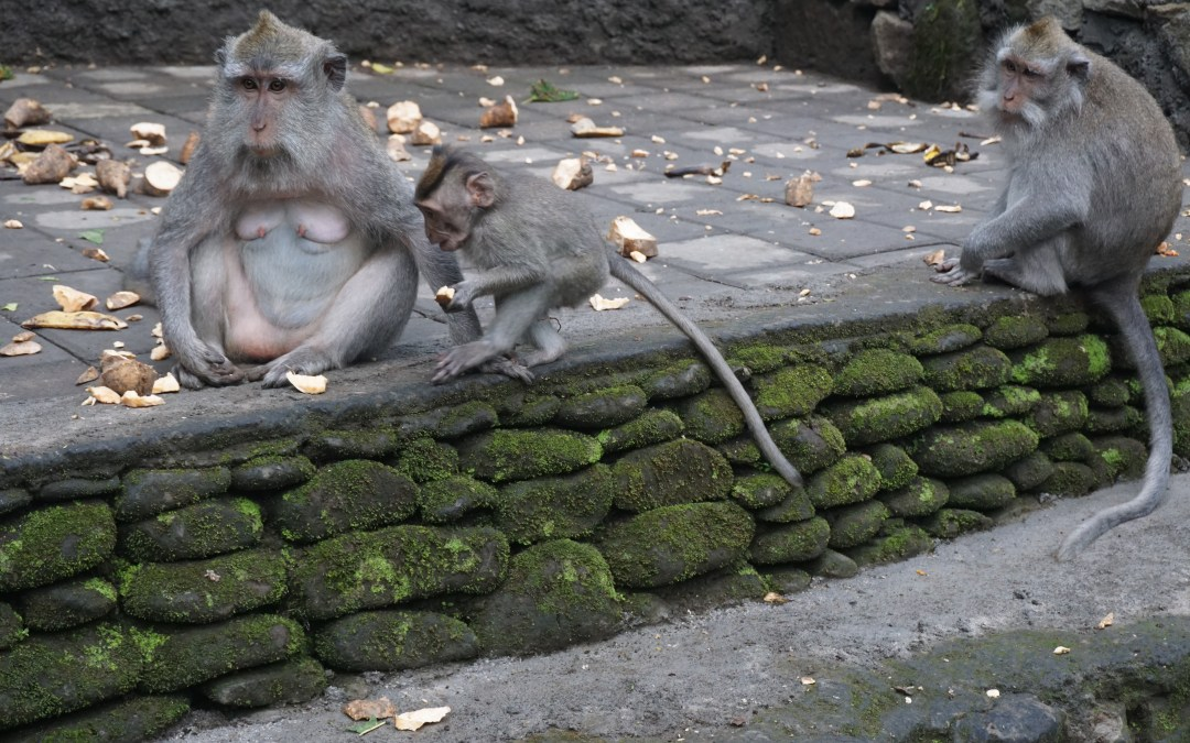 Visiting the Sacred Monkey Forest Sanctuary in Ubud, Bali