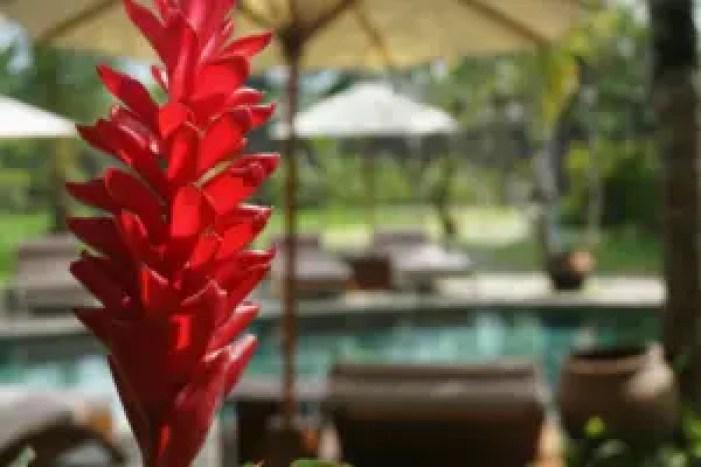 Bali tourist hotspot