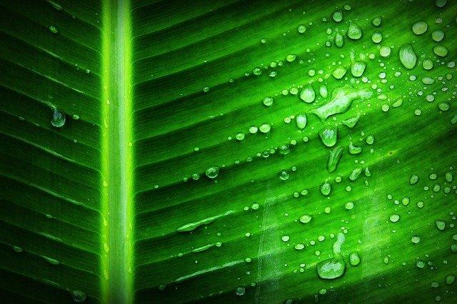 Processus naturel de création d'oxygène par les plantes vertes