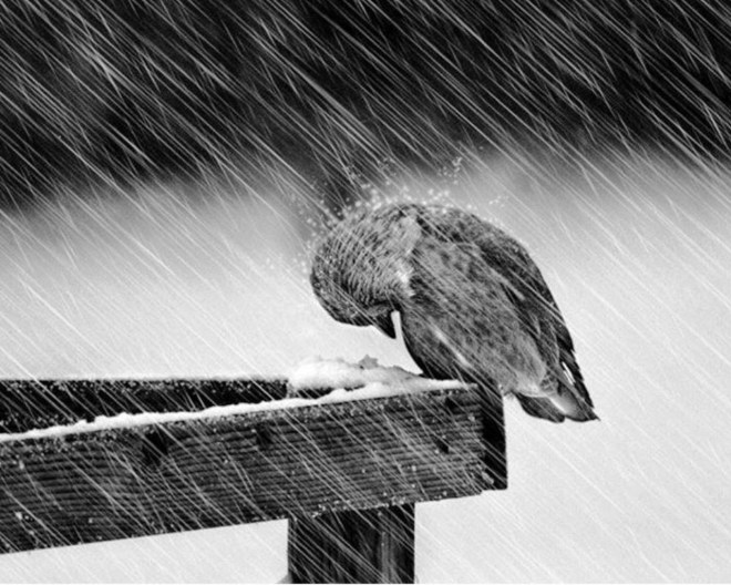 bird-in-the-rain
