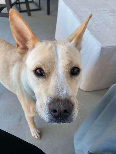 Foster dog Nala | Fairly Southern