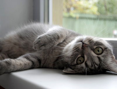 Cat Sitter Rates Philadelphia, PA