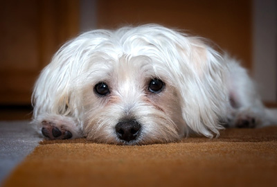 Dog Sitting Rates for Companies Servicing Philadelphia, PA