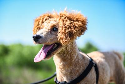 Dog Walk Rates Philadelphia, PA with $ Ranges by Company