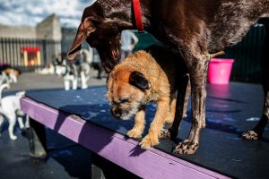 Doggy Daycare Cost: Prices Near Me In Philadelphia, PA