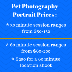 Pet Photography Portrait Prices