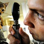 Philadelphia Animal Hospitals: Find A Vet Near You