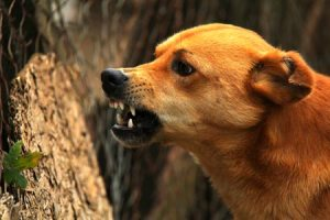 First time dog owner tips: how to read a dog's body language